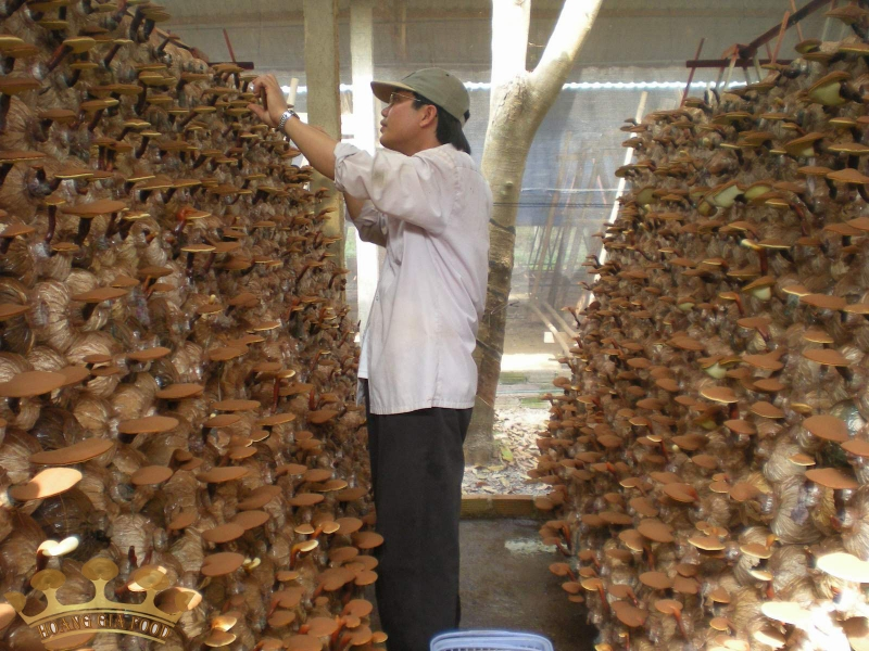 Trồng các loại nấm