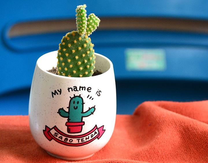 Cây xương rồng cảnh mini – cây kiểng mini hot thị trường