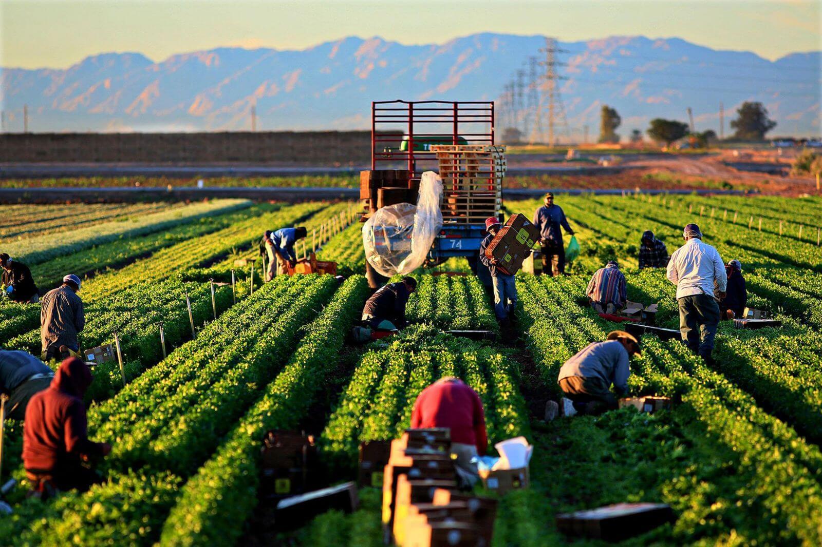 Ngành kinh tế nông nghiệp
