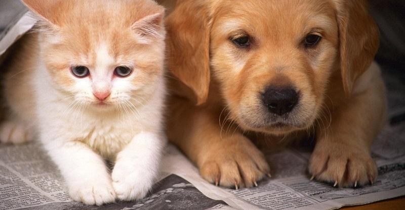 Kỹ thuật nuôi chó cảnh, 4 kinh nghiệm kinh doanh thú cưng cần có - Trang thông tin về OTA - Du lịch - Khách sạn - hàng đầu Việt Nam